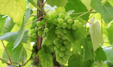 Ruta del vino Rias Baixas